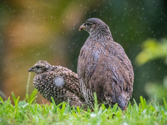 Birds from the garden